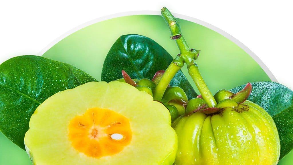 potencial garcinia cambogia vegetale